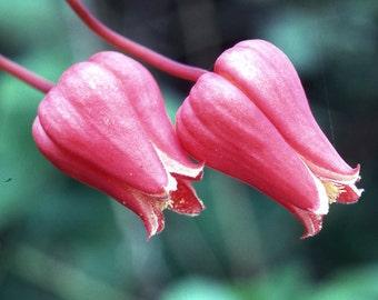 Flower with Pollen - Digital Download