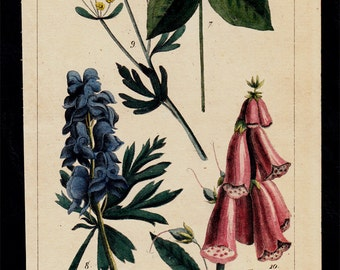 1833 Antique print of poisonous plants, flowers, hand colored engraving