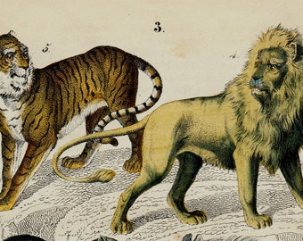 1850 Antique ANIMAL print, mammals, lion, tiger, fox, hyena, hand colored engraving