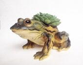 Ben the planted Bullfrog
