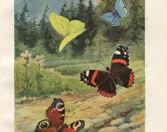 European Butterflies 1920s Vintage Print Brehms Tierleben, Retro Decor. Entomology