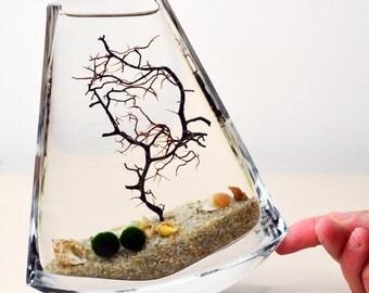 Marimo Terrarium Japanese Moss Ball Aquarium Slanted Rim