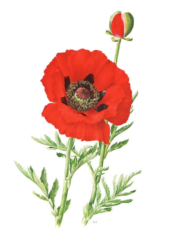 Nerdy image intended for poppy printable