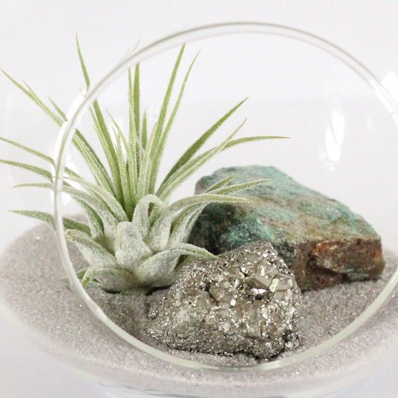 Terrarium Kit - Air Plant, Pyrite, Fuchsite, and Gray Sand