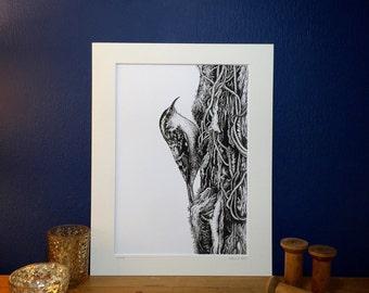 Treecreeper - Japanese Ink Art Print from an original fine line ink drawing