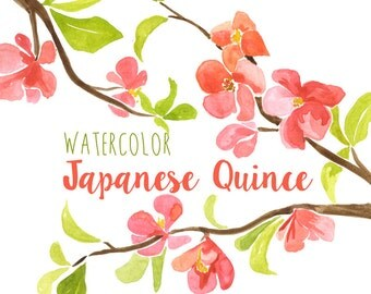Japanese Quince Clipart Tree Branch Floral Pink Branches Clip Art