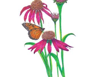 Echinacea Illustration Print