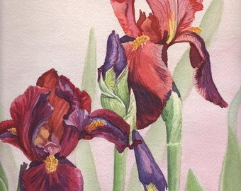Burgundy Irises Watercolor