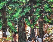 Redwood Trees, Tree Art, ...