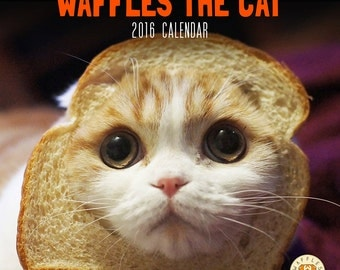 Waffles the Cat 2016 Calendar