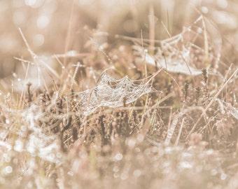 Intricate Web > Spider Web Photography > Nature Photography > Meadow Photography > Spiderweb Photography > Fine Art Print > Home Decor
