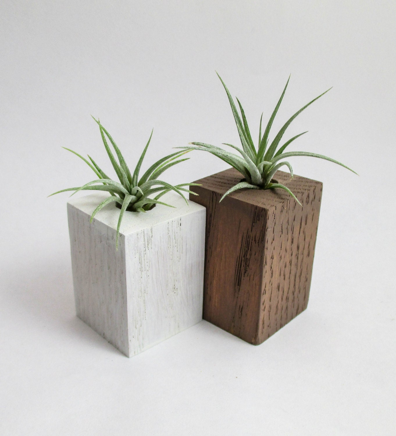 Air planters air plants wood air plant planters holders for Air plant planters