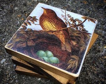 COASTER / COASTERS - wooden - Rustic Nesting Bird