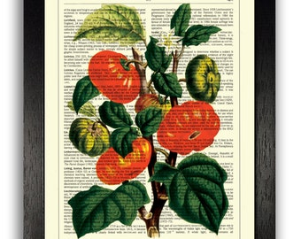 Pumpkin Plant Vintage Illustration, Botanical Print, Floral Art, Home Office Decor, Book Art, Garden Gifts, Kitchen Decor, Unique Art Gift
