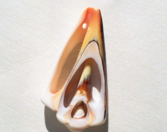 Strombus Shell Focal, Cut Strombus Shell, Strombus Shell Pendant, Natural Shell Focal, 40mm x 22mm, bottom drilled front to back