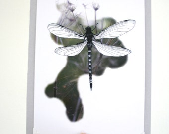 Print Dragonfly