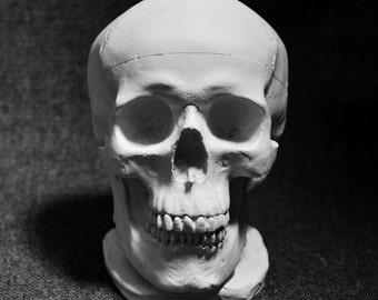 Human Skull - Plaster Cast