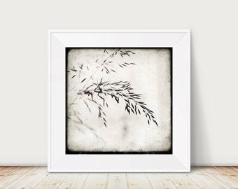 Fragile - Floral Fine Art Print in Black and White