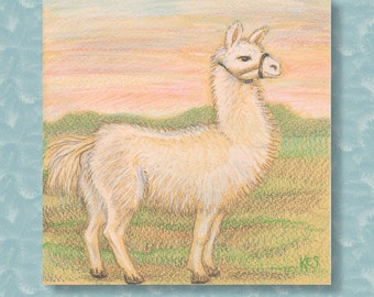 Llama: Coloured pencil sketch of a Llama (or alpaca). Original Art - not a print. A drawing, in coloured pencils on yellow tinted paper.