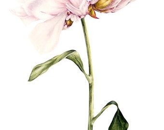 Peony Print, Art Print Home Decor, Wall Art, Botanical Peony Painting, Botanical Watercolor, Botanical Illustration, Gift for Her, Flower