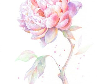 Fine art watercolor painting, flower portrait, pink, purple, peony, WATERCOLOR PRINT, giclee print, flower interest