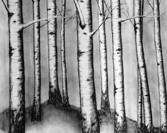 Charcoal Drawing {Birch Tree Forrest} Art