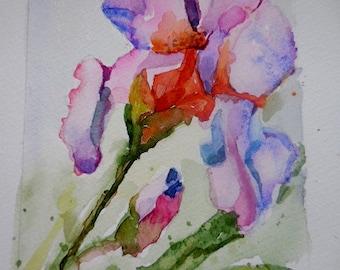 Watercolor Iris, original painting, small watercolors, mat included.
