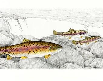 Rheotaxis      Rainbow trout  -      HYBRID ORIGINAL