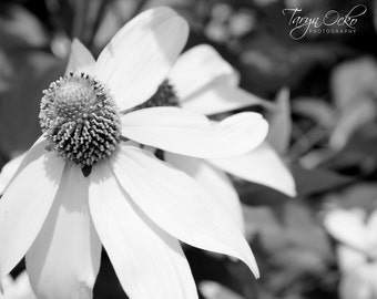 Black and White Flower Photography Print