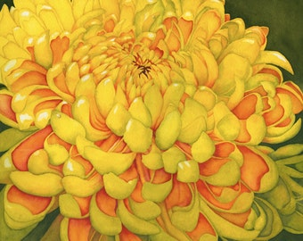 Watercolor painting...MUM'S THE WORD...chrysanthemum...giclee