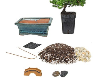Bonsai Tree Starter Kit, Complete Do-It-Yourself Kit with 2 Year Old Petite Japanese Juniper (Free Shipping!)