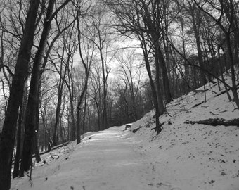 Black and White Winter Path Poster