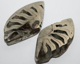 Pyritized Ammonite Pair Cabochons, Pyrite ammonite cabochons, 45х22х6 mm