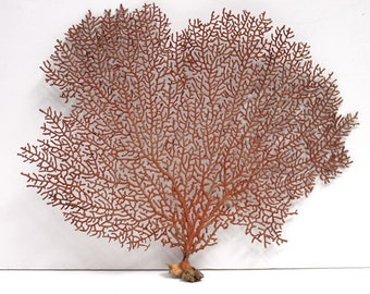 Red Sea Fan Coral | Beach Decor
