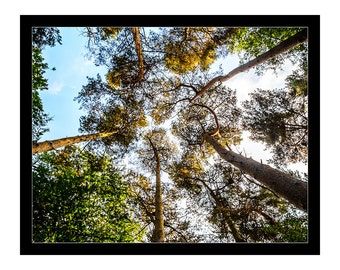 Fine Art Home Office Decor Wall Thetford Forrest Autumn Trees Woodland Countryside Norfolk Print Prints Photography