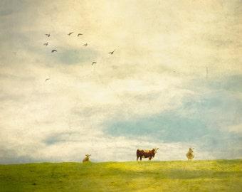Limited Edition Print, Fine Art Photography, Countryside, Cows, Farm, Wall Art, Artistic, Texture Art