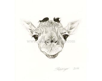 Giraffe Head Limited Edition Print