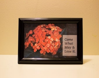 "Framed Flower Photo and Quote - ""Come What May & Love it"""