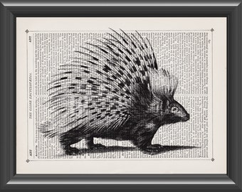 porcupine black and white vintage art print home decor wall art dictionary print