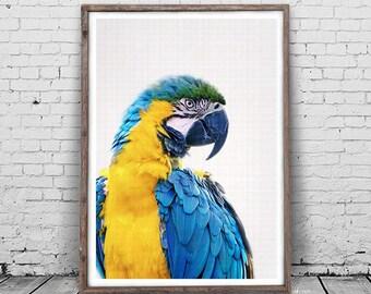 Bird Print, Parrot Print, Animal Head Wall Art, Animal Photography, Large Print, Colorful Bird Photo, Minimalist Wall Art, animal print