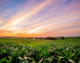 Iowa cornfield - landscape photography - sunrise photo - farming - canvas print