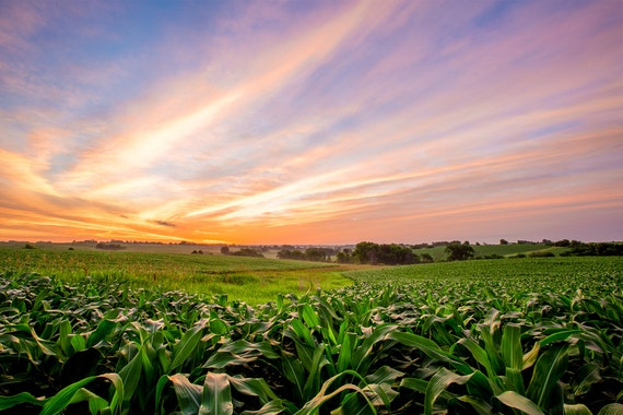 Iowa Cornfield Landscape Photography Sunrise Photo
