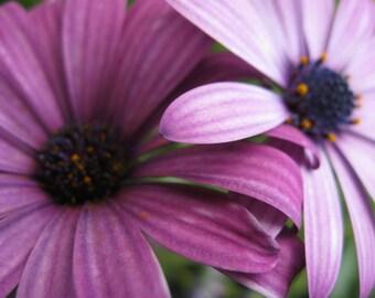 Purple Flowers, Digital downloads