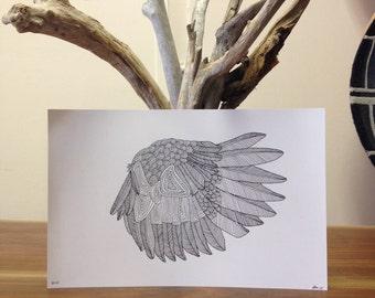 Bird Wing Print