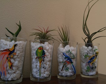 Air Plants for Bird Lovers