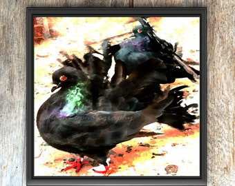 Indian fantail pigeon, pigeon print, pigeon paintography, black pigeons