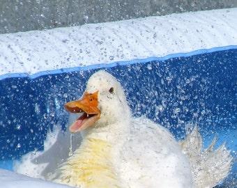Happy Duck, Animal Photography, Bird Photography, Ducks