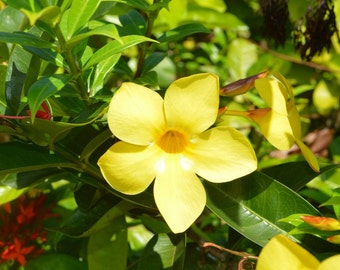 Tropical Flowers Photography,  Digital Download Flowers Photography, Plant Photography