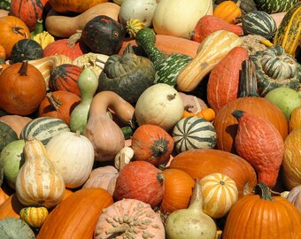 Autumn Gourds:  Botanical art photography prints for home or office wall decor.