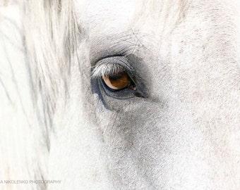 White Horse Eye Photography Beauty Nature Animal